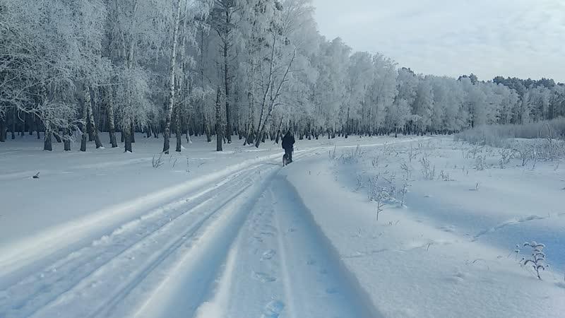 зимняя прогулка Альфы