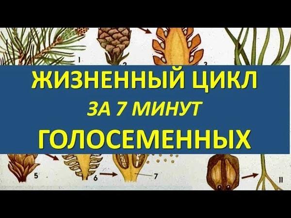 ЖИЗНЕННЫЙ ЦИКЛ ГОЛОСЕМЕННЫХ ЗА 7 МИНУТ ( разбор заданий из ЕГЭ)