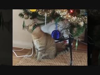 Новогодние приключения домашних животных