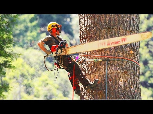 Fastest Cutting Trees with Long Chainsaw Machines - Dangerous Climbing The Top Down