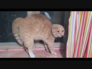 Кот сошел с ума