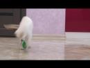 Котенок Феликс играет с шариком смешное видео приколы с котами