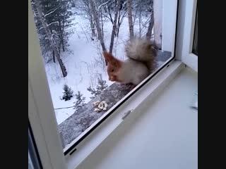 Кто ходит в гости по утрам, тот поступает мудро (Barnaul22)