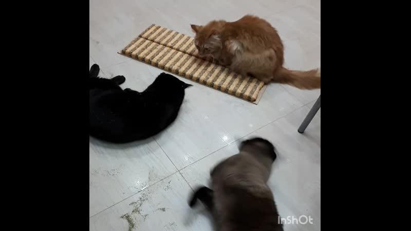 Котиков прет от кошачей мяты 😸