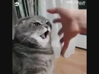 Женские Хитрости (vk.com/womantrlck) милые котики