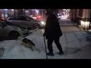 В Перми покалеченный поездом пес научился ходить на двух лапах