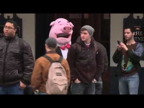 National Pig Day | New Pig