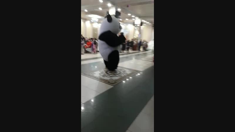 Панда шоу Байконур