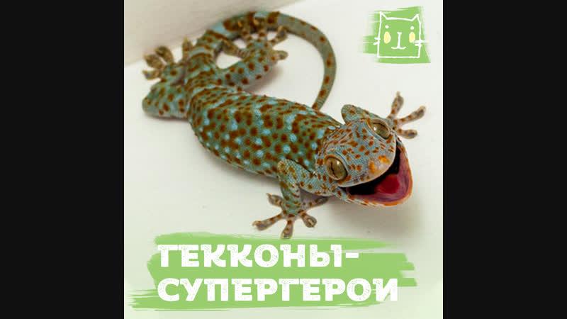 Суперспособности гекконов