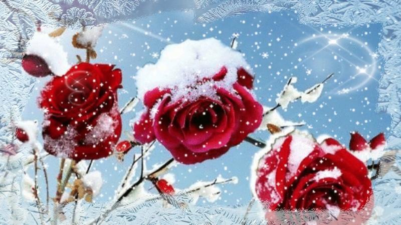 С ДНЕМ РОЖДЕНИЯ Пусть даже в зимние морозы Вам всегда приносят розы