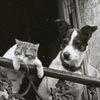 Валерий Бондаренко: Благословение котов