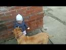 Собака друг человека