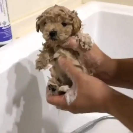 "🄿🅄🄿🄿🅈 🄾🄵 🅃🄷🄴 🄳🄰🅈 🐶❤ on Instagram: ""Bath time! 😊😍😍 © @lovinpet"""