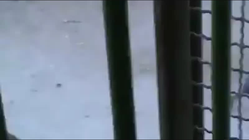 Как израильские военные пинают детей Палестины [Dagestan today]