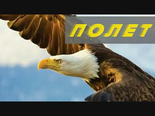 ПОЛЁТ: гениальность, воплощённая в птицах / FLIGHT: the genius of birds (2013) 1080p