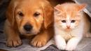 Теперь у нас одна жизнь на двоих - сказал котёнок щенку и обнял его грязными лапами...