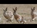 18 ТРОИЦА охота на зайца сезон осень 2018