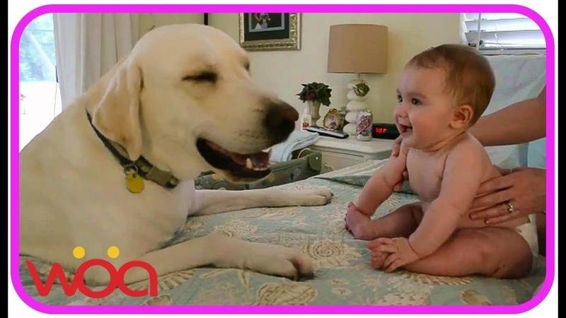 【犬と赤ちゃん】赤ちゃんと犬絶妙な関係・毎日赤ちゃんを笑わせる29356