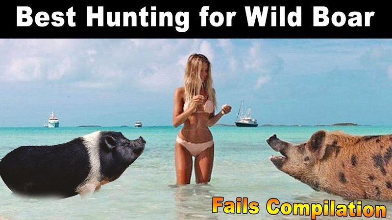 Best Hunting for Wild Boar Fails Compilation Like