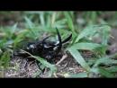 Удивительные приключения жука в траве