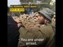 Les forces d'occupation israéliennes ont empêché ces agriculteurs palestiniens de récolter leurs olives