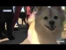 Звичайний пес з вулиці також може стати кращим другом