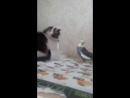 Котенок в ДАР!