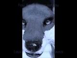 L'amour Est Bleu - Playback fursuit Marjorie fox