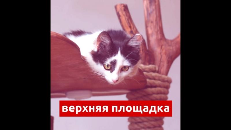 Большой дом для кота ручной работы
