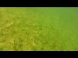 Немножко подводного мира голубого озера Кривбасса