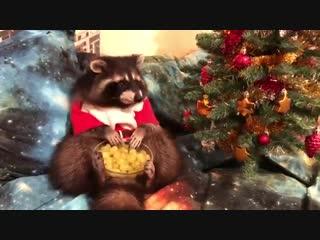 アライグマのクリスマス