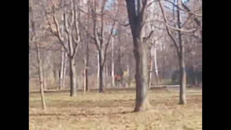 Воздуходувка в парке издалека