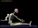 The Proper Technique for the Seated Hamstring Stretch_ 3D Animation of Muscles i