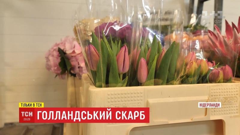 Історії ТСН. Голландський скарб нелегкий шлях тюльпана до України