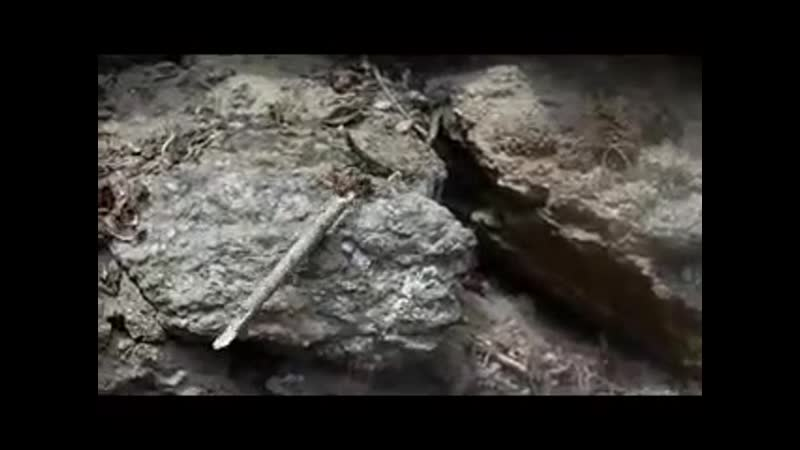 Mraveneček v lese, těžkou kládu nese...