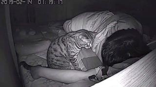 Он поставил скрытую камеру! И вот, что делает кошка, пока он спит