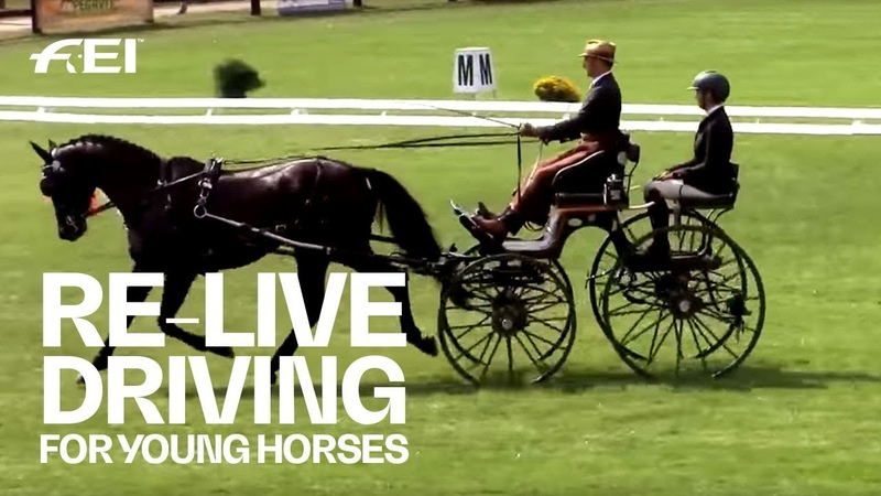 RE-LIVE - Day 1 (2/2) (Quali) - FEI World Driving Championships for Young Horses 2018 | Mezöhegyes