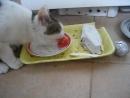 Кошка ожила и ест помидор