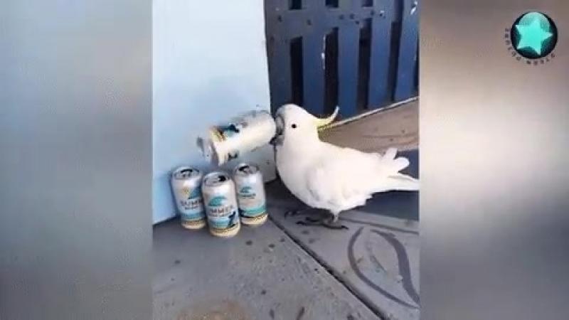 попугай алкоголик горе в семье