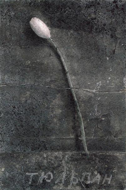 Юрий Леонидович Купер (1940, Москва). Тюльпаны.