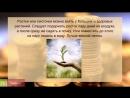 Как ухаживать за денежным деревом Уход за денежным деревом в домашних условиях