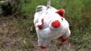 Сюжет ТСН24: В Щекино женщина украшает двор повешенными игрушками