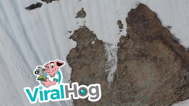 Fallen Bear Cub Climbs Back to Mama|| ViralHog