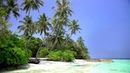🎧 Relaxing Tropical Paradise Island Maldives / White Sand Palm Beach with Blue Sky and Sea View