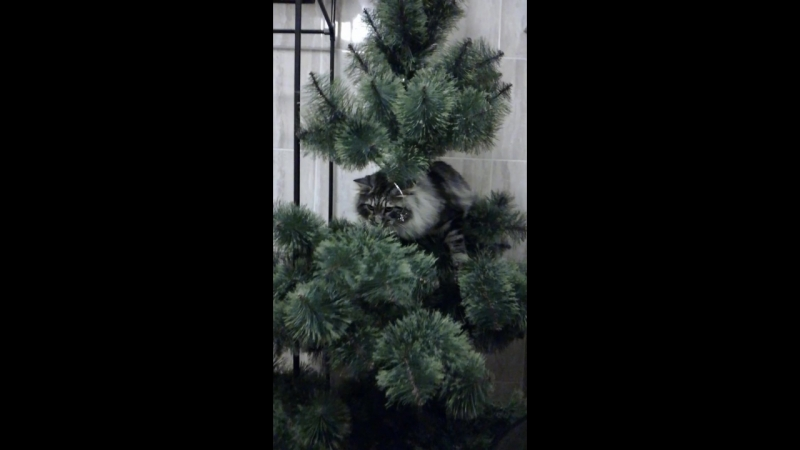 Бедная наша елка...