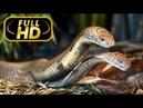 Мафия Кобры / FULL HD - Документальный фильм на Amazing Animals TV