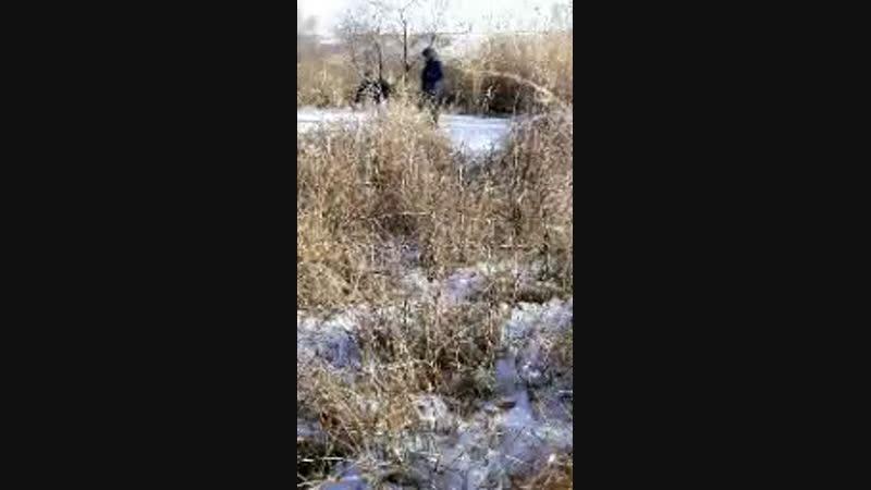гуляем на болоте