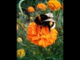 Дикие пчелы - дикий мед