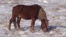 Жеребец Рисунок Косяк лошадей на зимнем пастбище