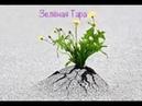 «Знаки. Зеленая Тара. Железобетонный аргумент 1. Почему надо праздновать День Победы». 3.06.2019